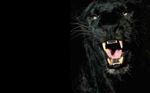 black-tiger-super-hd-2-0-s-307x512